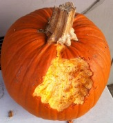 Scrappy's 2011 Pumpkin